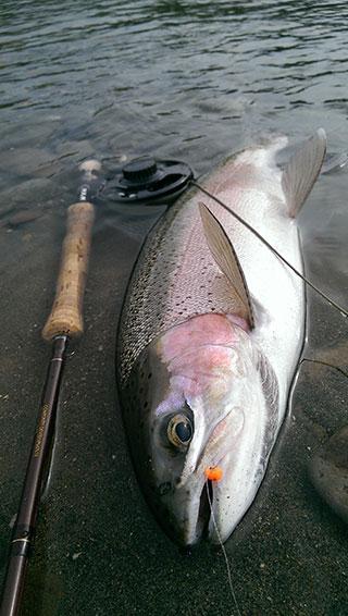 Tongariro-Fishing-Guide