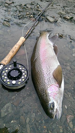 Tongariro-Fishing-Guide-Rainbow Trout